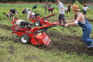 Tilling the Soil photo image